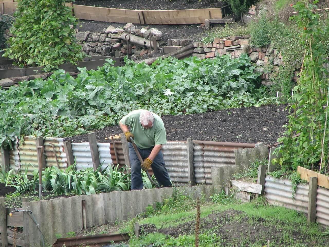 Kleingärtner bei der Gartenarbeit