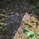 Kompost mit Kartoffelschale