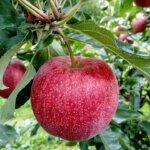 fruit-2740499_1280